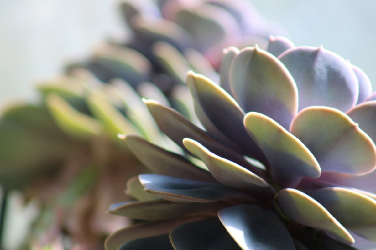 Cactuses can reproduce by seeds or by pieces that fall off and take root. Join us for our Botanic Garden Workshop Series with Dave Ferguson, curator of desert plants at the #ABQBioPark, to learn how to propagate plants yourself on 2/23 10 a.m. - noon. http://bit.ly/2RlQS7s