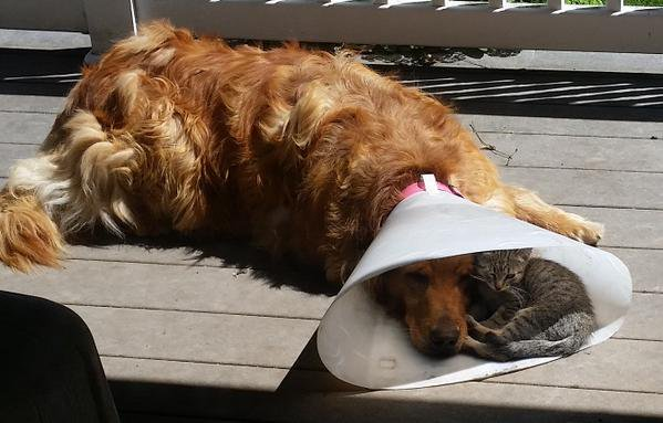 Everybody needs a buddy when you're down and out.