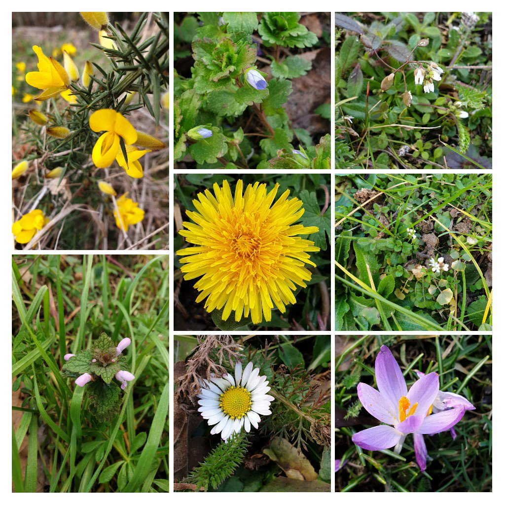 Great variety of #wildflowers in bloom along a roadside #verge in Leicestershire today for #wildflowerhour #plants #nature #getoutside 🌱🌼🌸🌿 @BSBIbotany @wildflower_hour