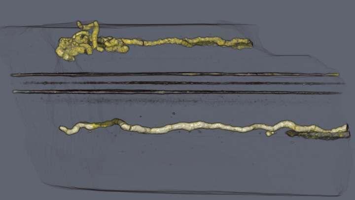 #Paleontology>> #OldestEver #Locomotion [IFL Science] World's Oldest Evidence Of Locomotion Uncovered In Gabon https://www.iflscience.com/plants-and-animals/worlds-oldest-evidence-of-locomotion-uncovered-in-gabon/…
