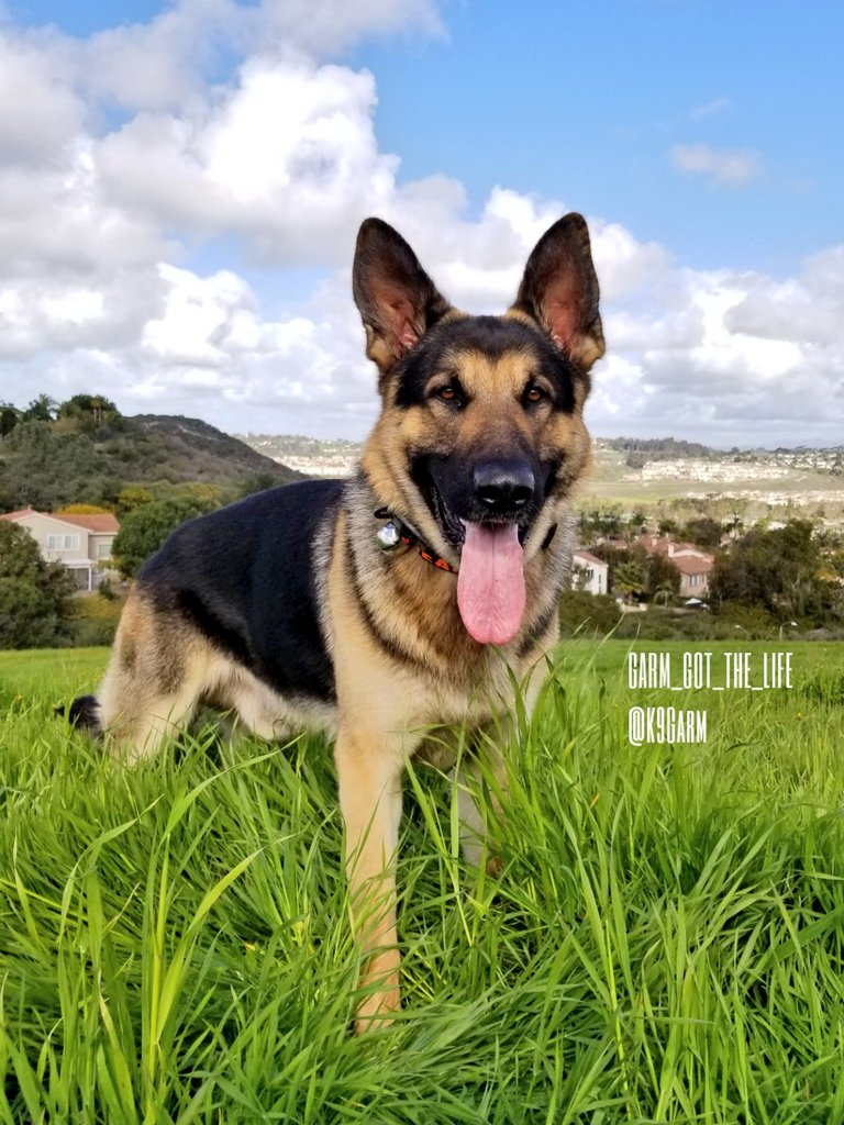 A beautiful morning spent with the #moosedog Now it&#39;s starting to rain, gonna be sad when summer comes #K9Garm #SARK9 #dogsoftwitter #dog #dogs #germanshepherd #gsd #moosedog<br>http://pic.twitter.com/s7pKehPd7C