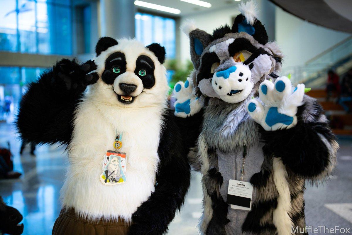 """Fursuit Panda mufflethefox on twitter: """"what a wonderful realistic panda"""