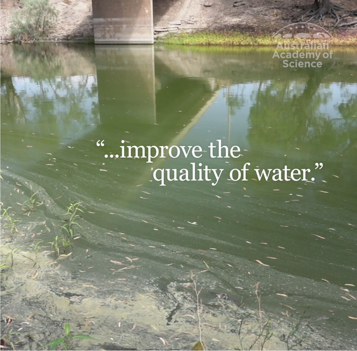 The expert panel recommends that #urgent  steps can and should be taken within six months to improve the quality of water throughout the Darling River.  #Fishkill  #auspol  #fishkills