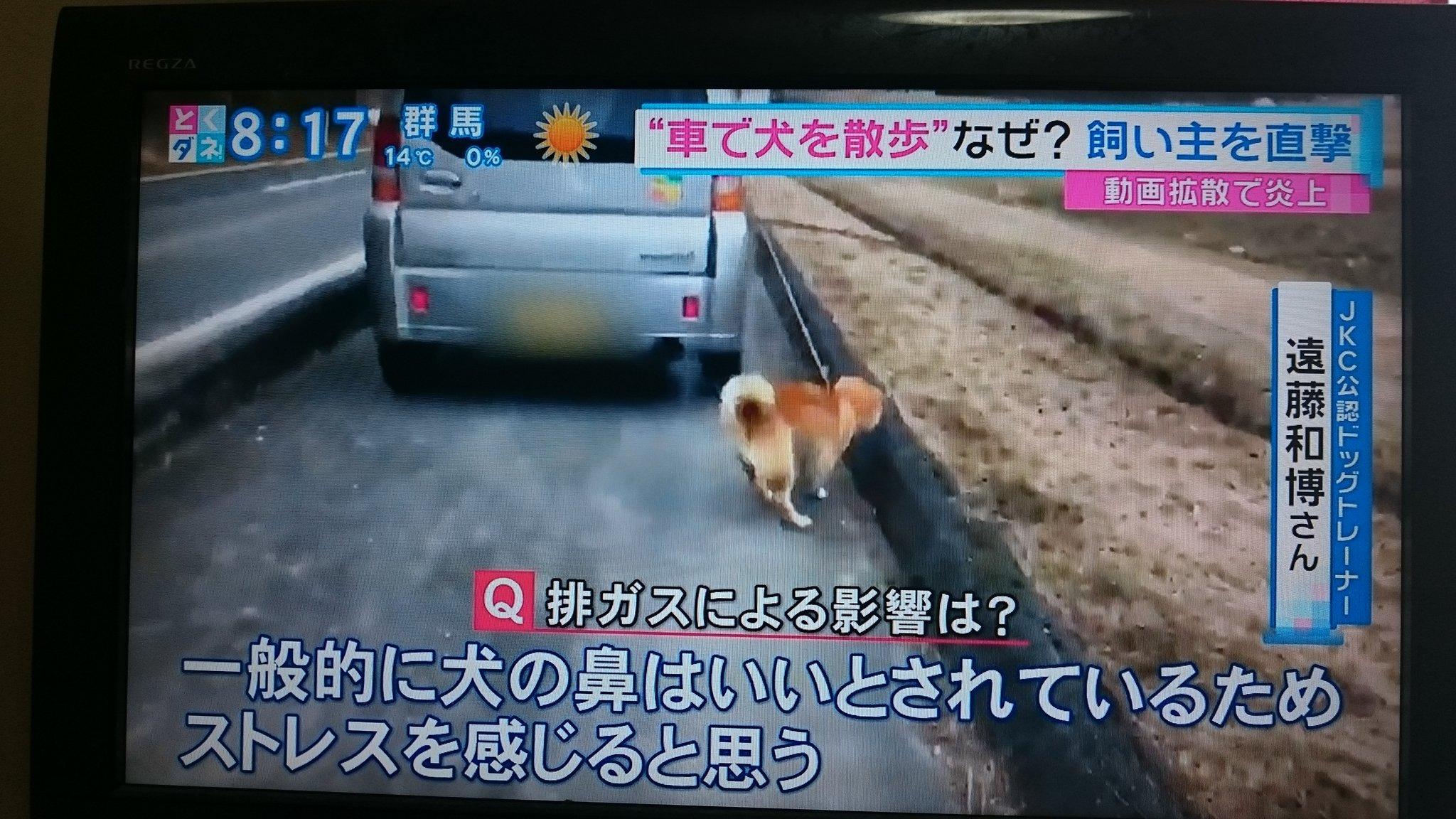 画像,#とくダネ 取り上げてくれてありがとう!犬を車で散歩していた老人何よりも怪我が無くて良かった! https://t.co/HO2f8IzyL5…