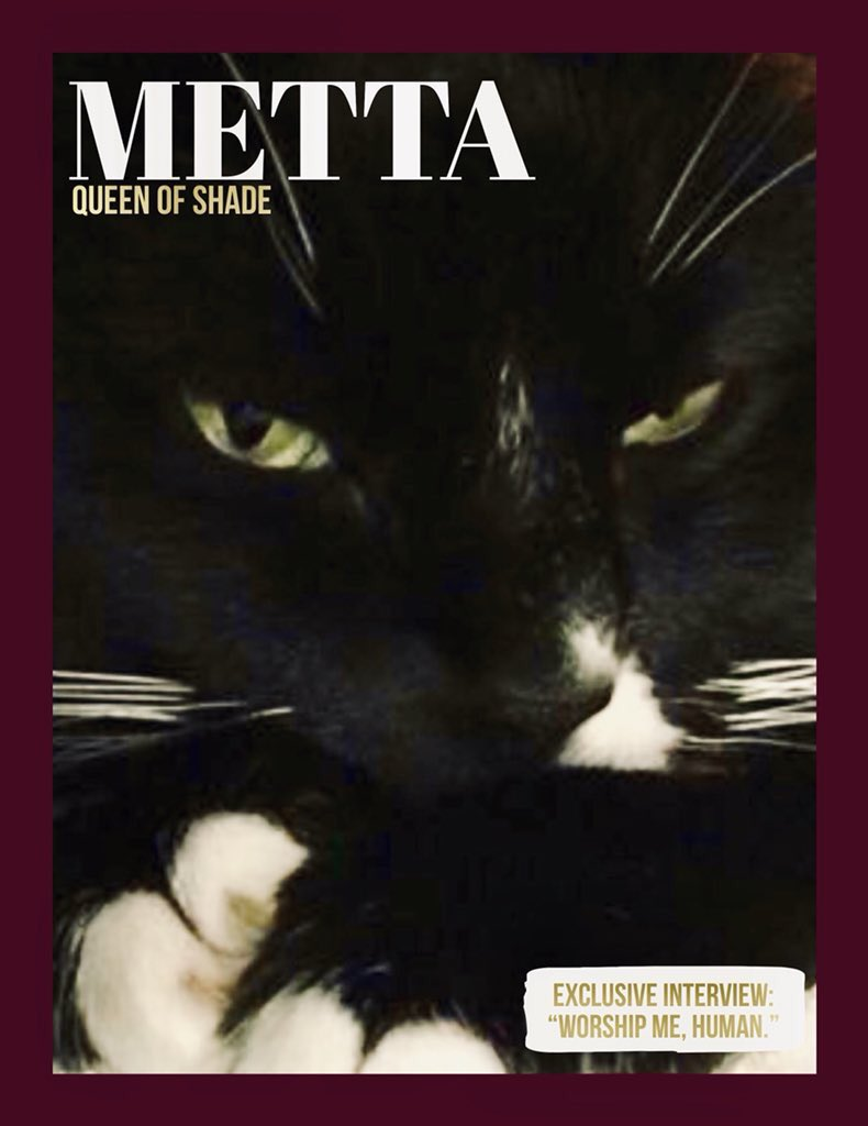 Metta made the cover of a meowgazine! Hope everyone has a peaceful week.    Thanks for creating the meowgazine cover! @SiameseAddy   #CatsofTwitter #MondayMotivation #CatLife #MettaVision<br>http://pic.twitter.com/3zBc1e3IVX