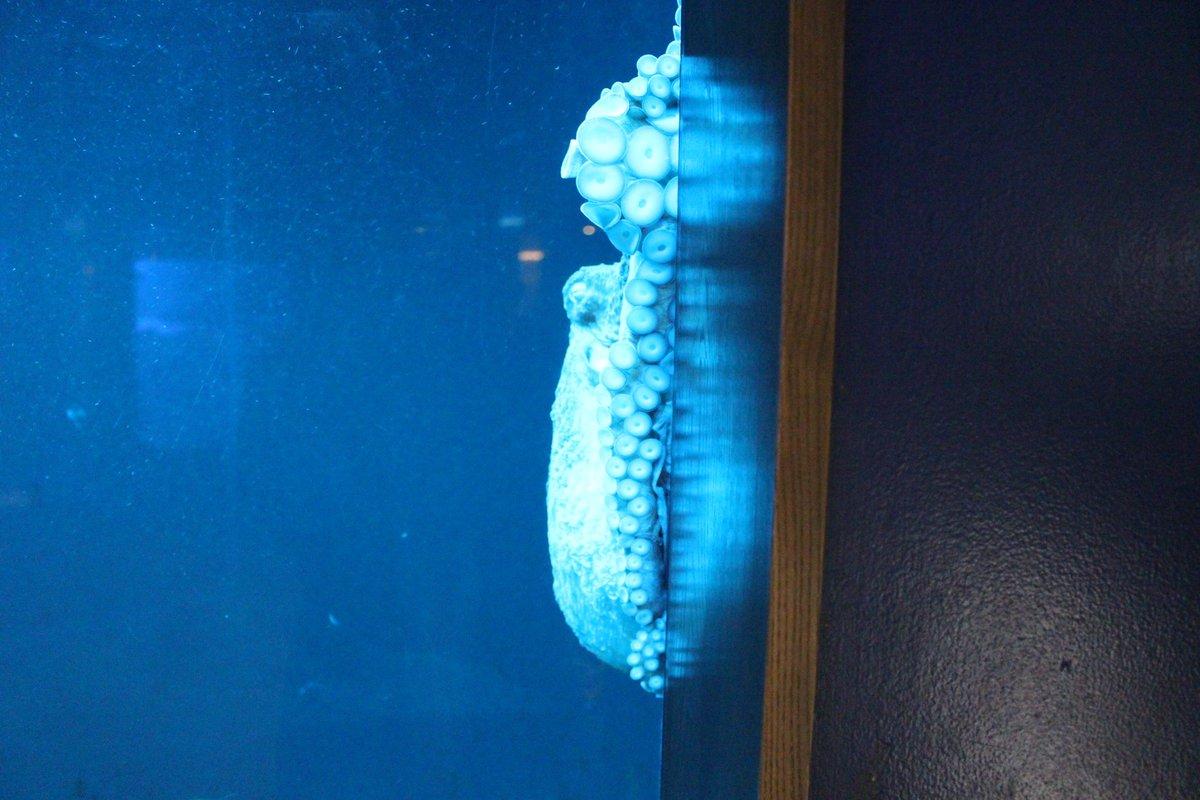 Kyoto_Aquarium photo