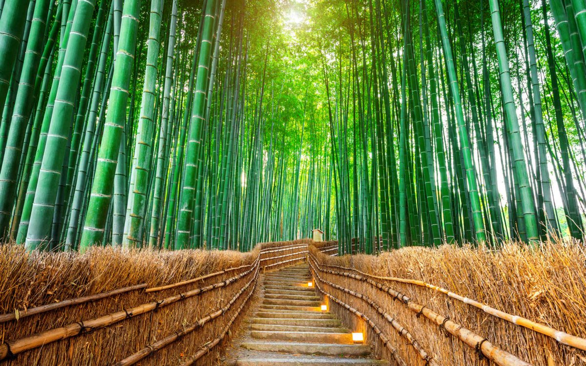Monday is great if I can spend it in bed. I&#39;m a man of simple pleasures, really. Enjoy A Great &amp; Magnificent Day Dear Friends― Arashiyama Bamboo Forest Kyoto, JAPAN.  #FelizLunes   #HappyMonday   #reflections<br>http://pic.twitter.com/0QsL0q4IUZ
