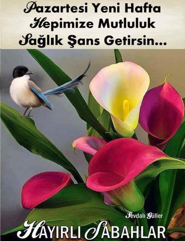 erkan salihoğlu's photo on #pazartesi