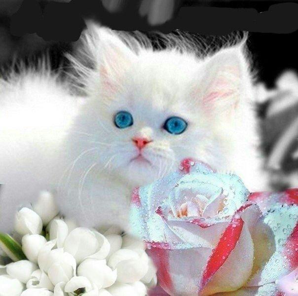 Открытка поздравляю котята, учителя музыки открытки