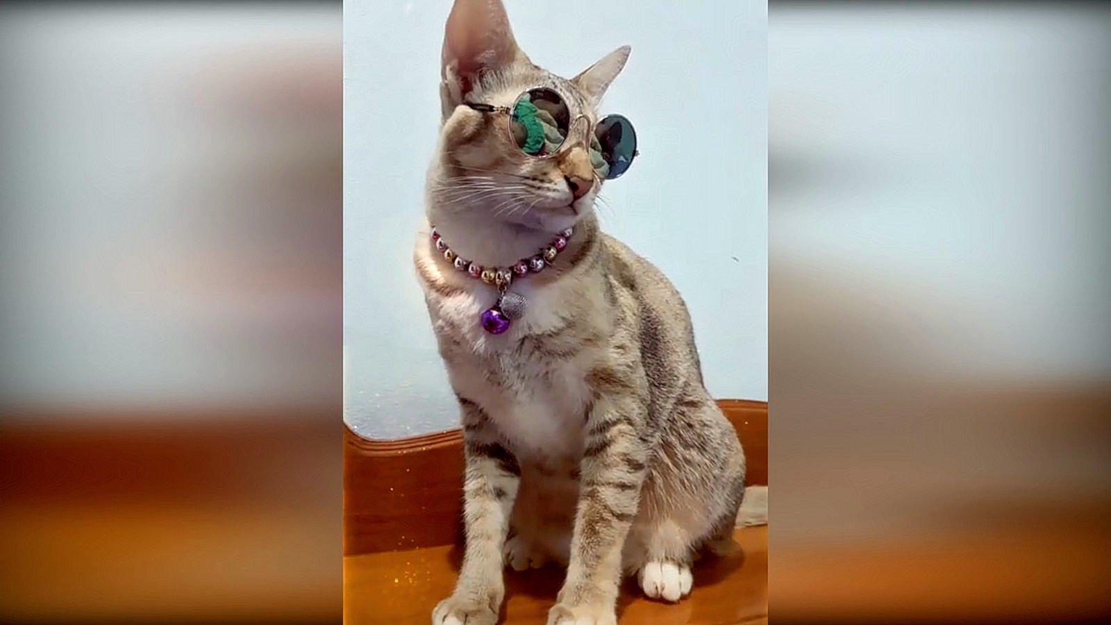 Приколы про котов до слез 2017 картинки, месяц