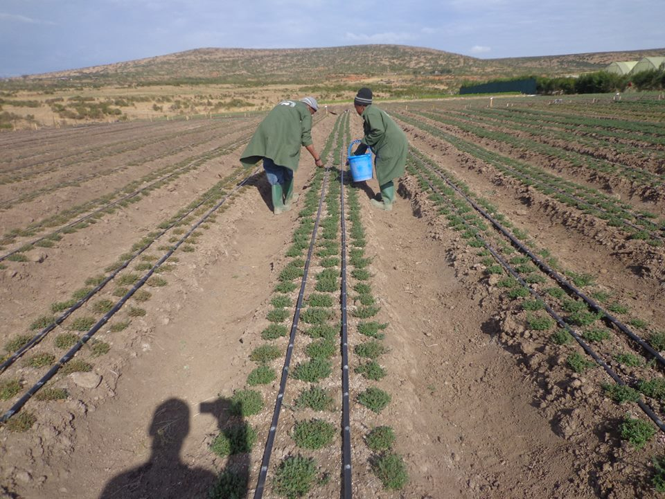 Rain-fed agriculture is becoming increasingly unreliable especially in the drier areas where the issue is more about getting any water, than it is about managing the water resources. Adopting Irrigated agriculture is the way. @#AgribusinessKe #MondayMotivaton #DayBreak <br>http://pic.twitter.com/5iRE37xsSe