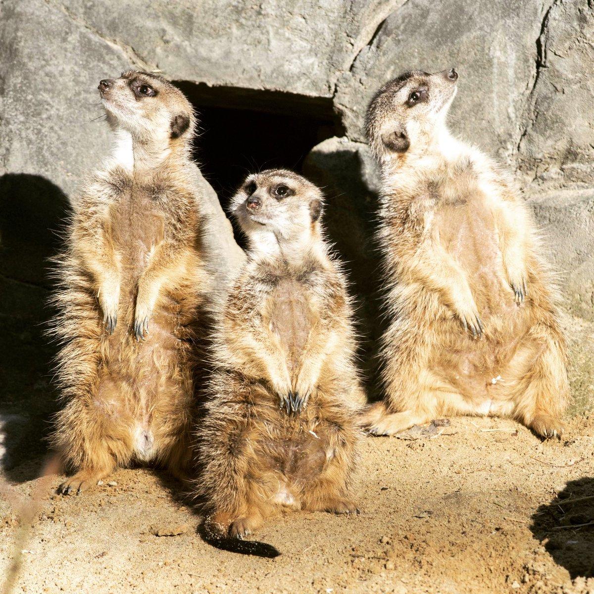 Zoo Tierpark Berlin's photo on start in die woche