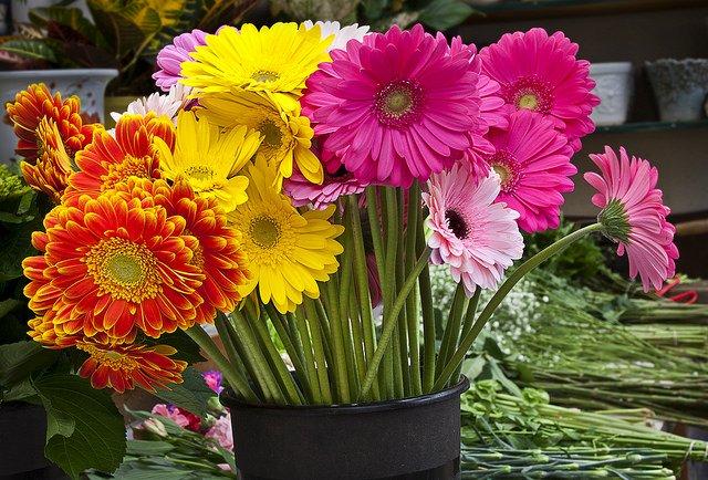 【ガーベラの花言葉】  ■赤 『神秘の愛』『限りなき挑戦』  ■ピンク 『崇高な愛』『思いやり』  ■黄色 『究極の愛』『やさしさ』  ■オレンジ 『忍耐強さ』『冒険心』  色ごとの花言葉を意識して贈りものにしても喜ばれそう* https://t.co/qhyzjaa6SU
