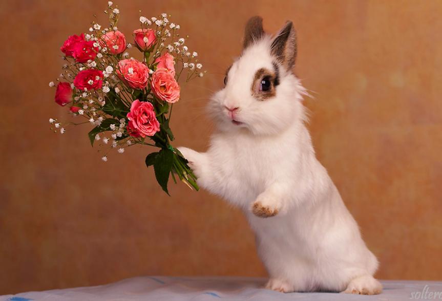 Открытки с днем рождения с кроликом