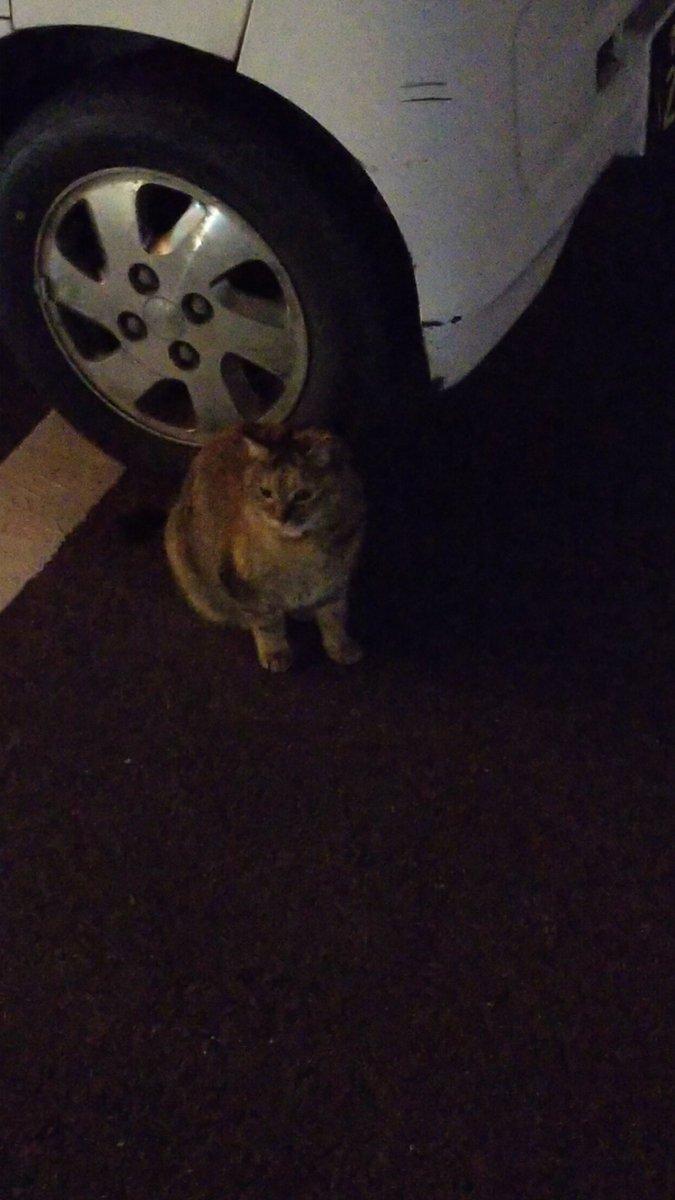 ごはんを食べ終わって、駐車場で俺を待っていたのは………………………その店の飼い猫でした🐈