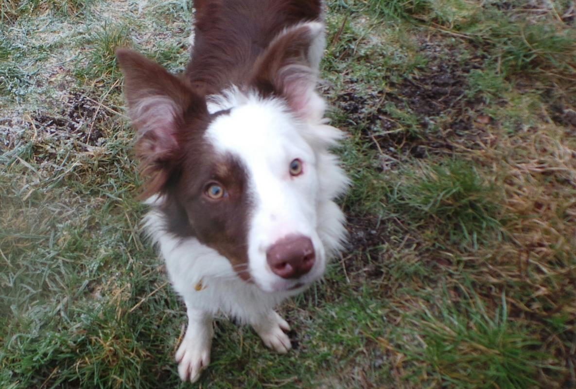 Just the thing for your #MondayMorning.. isn&#39;t Laddie adorable!  Laddie is a 6 month old Border Collie searching for his #specialsomeone  He&#39;s a really friendly boy who loves playing in the garden and would love to find his dream home in the countryside #adoptme #rehome<br>http://pic.twitter.com/76QGNS3ffE
