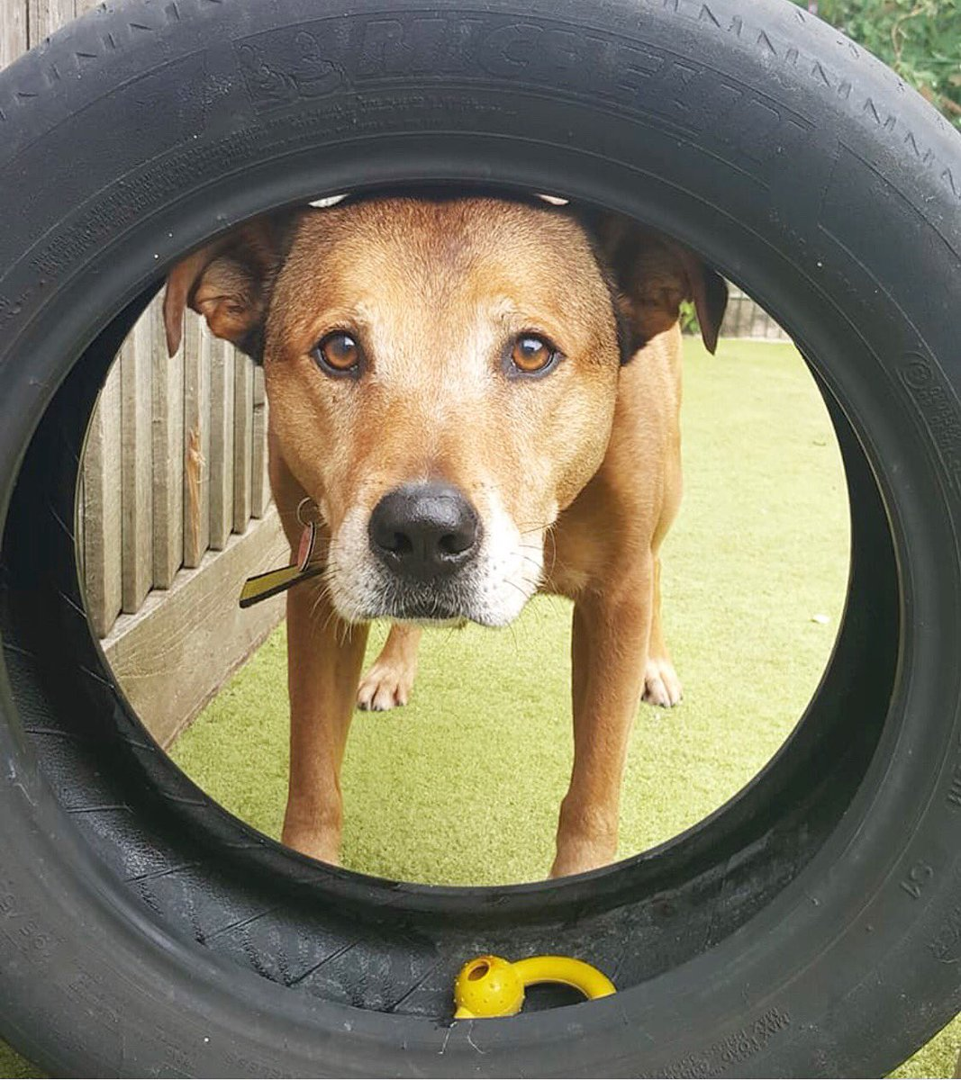 #MondayMood: Herbie willingly putting his head through a tyre but couldn't look more confused about it  <br>http://pic.twitter.com/uvyu8IV63x