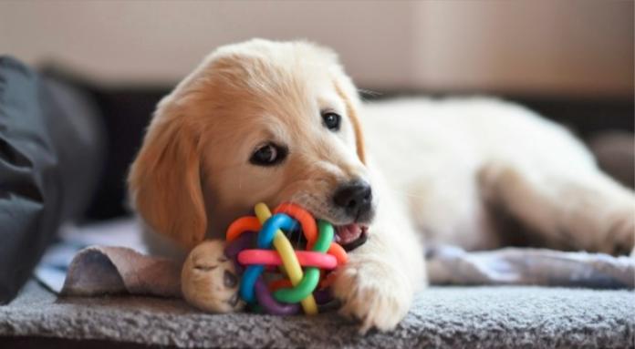 How 'fur babies' could spark a big boost in the pet insurance market. #ausbiz #puppies  https://t.co/pVO8cjyb4r