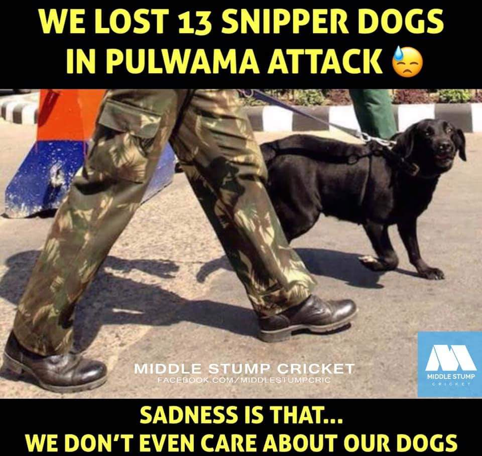When I Saw this Pic Really Felt Sad 😞  Mark This Word Pakistan Peoples Even Dog Is Waiting To Take  Revenge 😡  Fucking Peoples   #HOMOPAK #FUCKISTAN