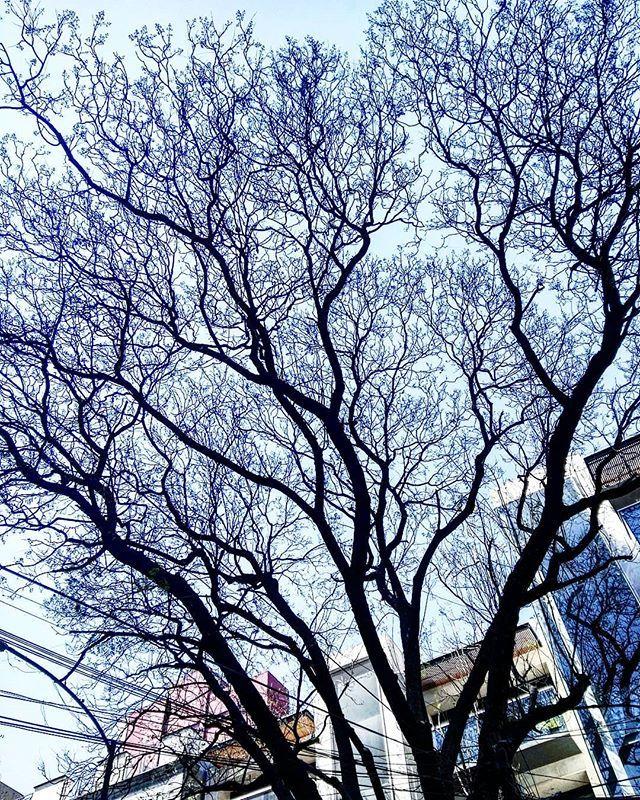 Prefiero los árboles sin flores ni plantas, que con jacarandas. 🌿 🌿 🌿 🌿 🌿  #Tarde #Vacación #Nubes #Paisaje #Atardecer #Cielo #Vista #MiVista #Ciudad #CiudadDeMéxico #DF #ColoniaRoma #DistritoFederal #Afternoon #Clouds #Landscape #Sunset #View #Sky #MyView #MéxicoCity #H…