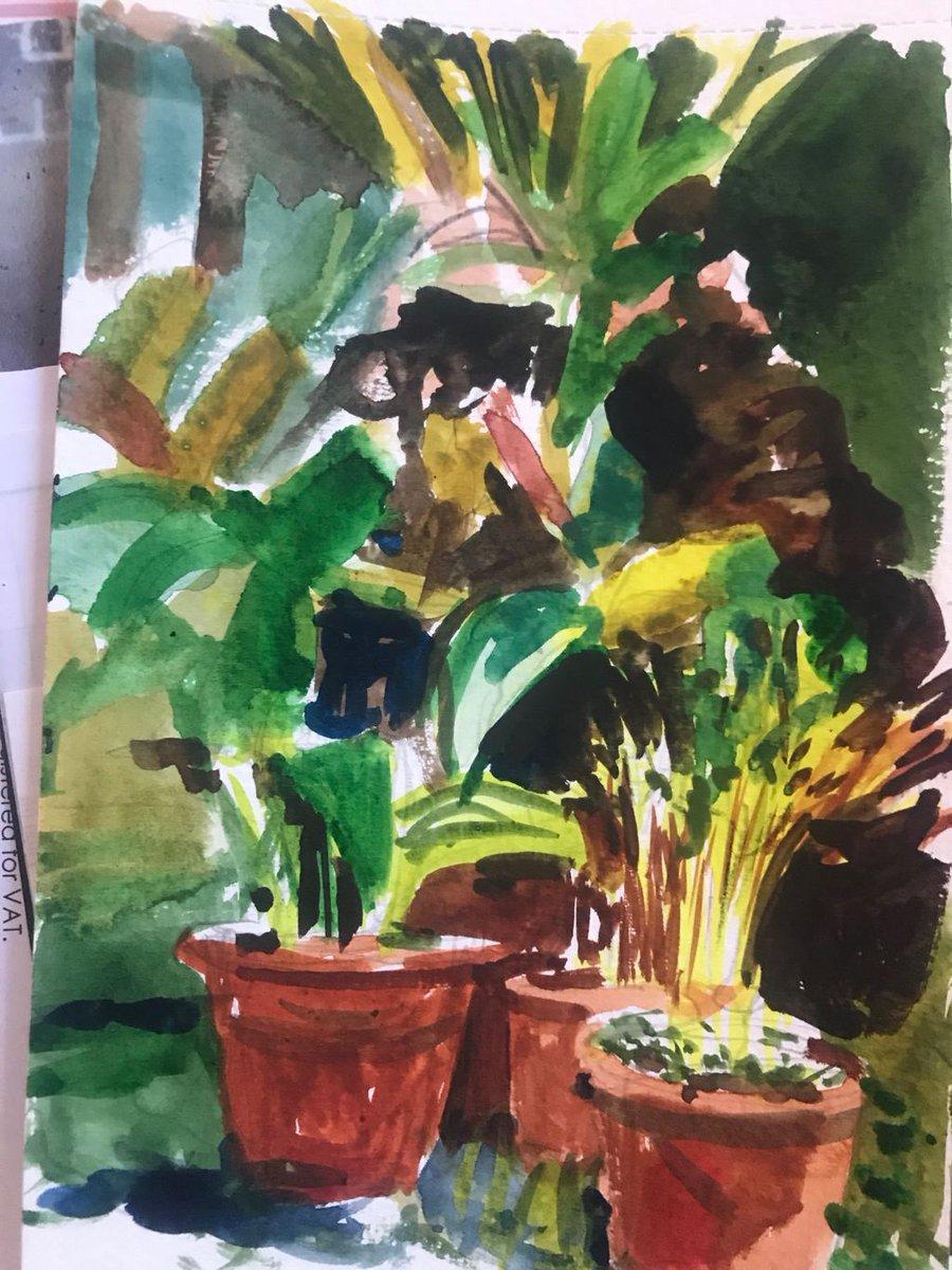Watercolour sketch pot plants in Spain.