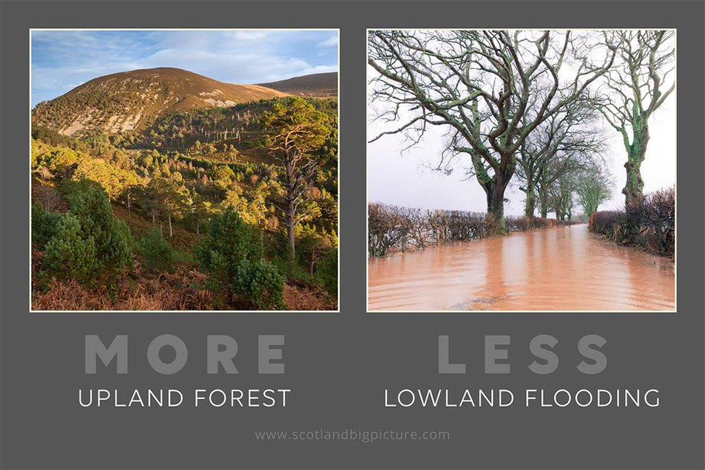 UK uplands are largely treeless which can lead to fast releases of water &amp; flooding Upland forests combat this by  Intercepting rainfall  Storing more water in the soil  Slowing the flow of flood waters  Reducing silt in our waterways. #MondayMotivation #MoreWildLessWorry<br>http://pic.twitter.com/FLoGHF4UlD