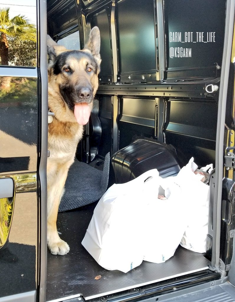 Thats 40lbs of lamb, beef and pork. The lady at the store asked if we were having a bbq. I said &quot;Nope, I have a very hungry dog.&quot;  #K9Garm #SARK9 #dogsoftwitter #dog #dogs #germanshepherd #gsd #moosedog #rawfeddog<br>http://pic.twitter.com/tjBCkecY9v