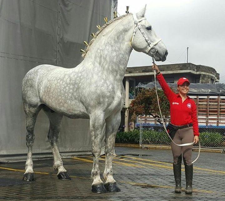 sexy horse ass