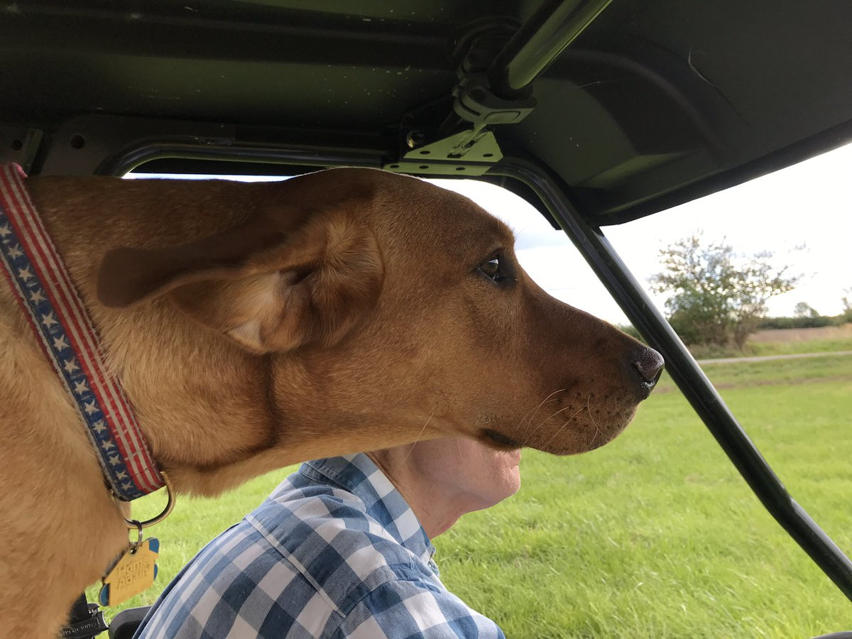 Who needs GPS with Huckleberry as a copilot?