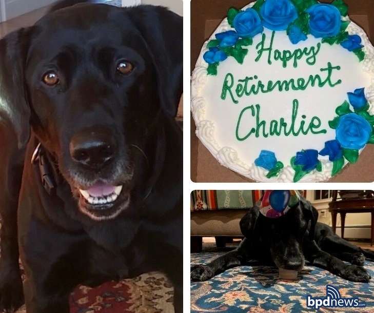 The men and women of the #BPD would like to say goodbye and best of luck to Charlie, a 12-year veteran of the  K-9 Unit, who's calling it a career after a dozen years of serving the citizens of Boston. From a grateful city, we say, 'Thanks Charlie.'  https://t.co/blL5lDRyrL