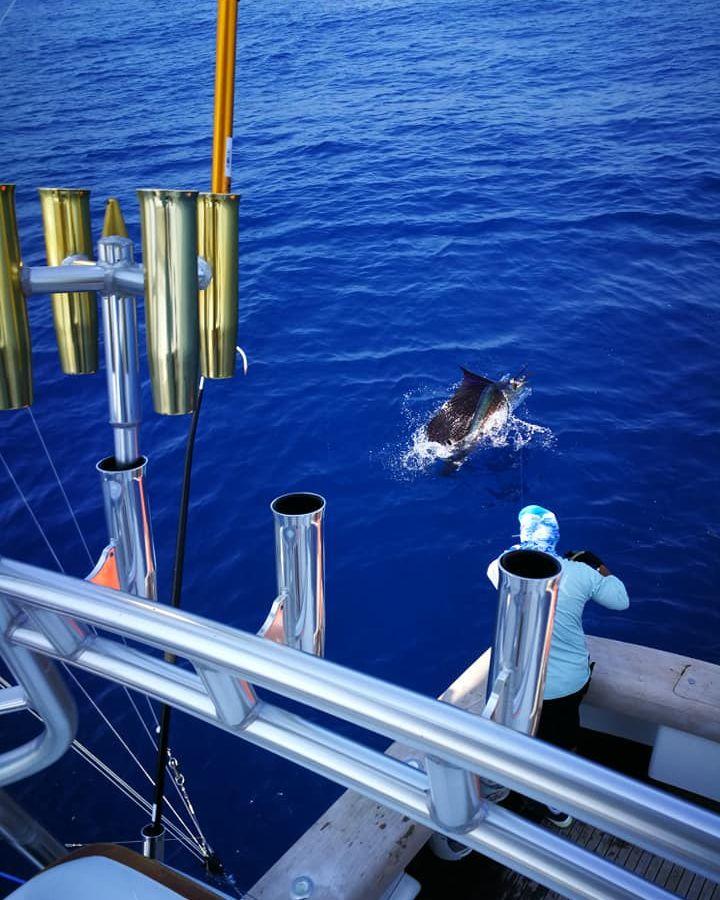 Los Suenos, CR - Open Fly released 12 Sailfish.