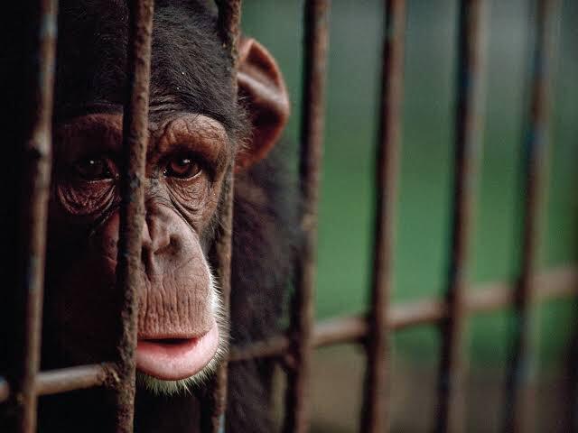 Hayvanat bahçeleri, bütün mahkûmların masum olduğu tek yerdir.! #YaşamHakkıKutsaldır  #KafeslerBoşalsın