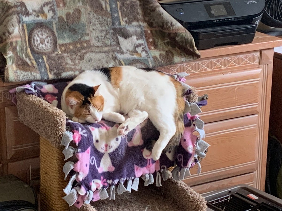 Patches: Hello Everyone, *Paw Waves*  Here's my Submission for #KittyLoafMonday  I'm going for the post modern renaissance pose.  I hope everyone has a wonderful week, may it be filled with lots of #Peace #Love and #Happiness   #RescuedCalico<br>http://pic.twitter.com/U20Cp0Hjdi