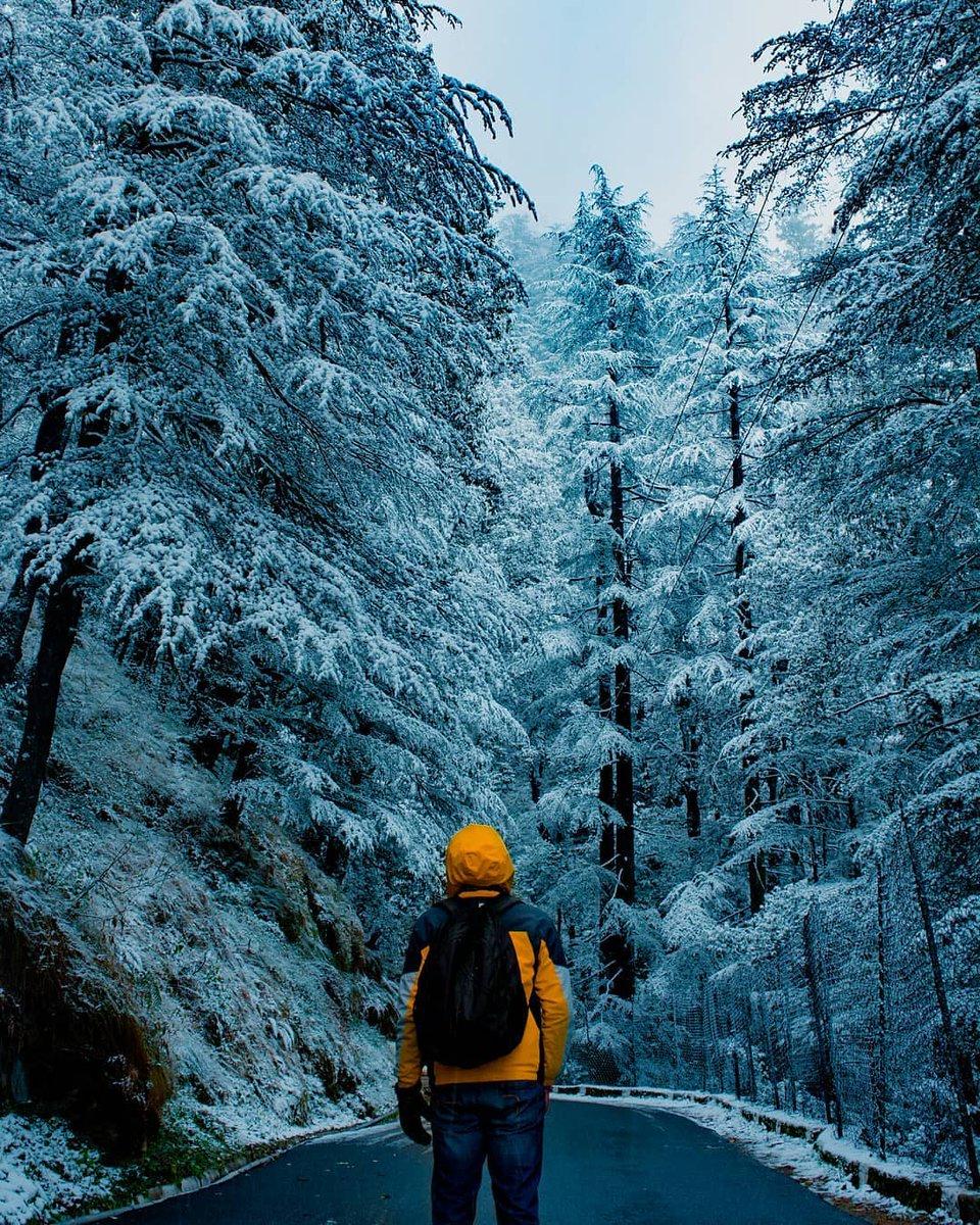 Shimla Local 🎄's photo on #ColdFeet