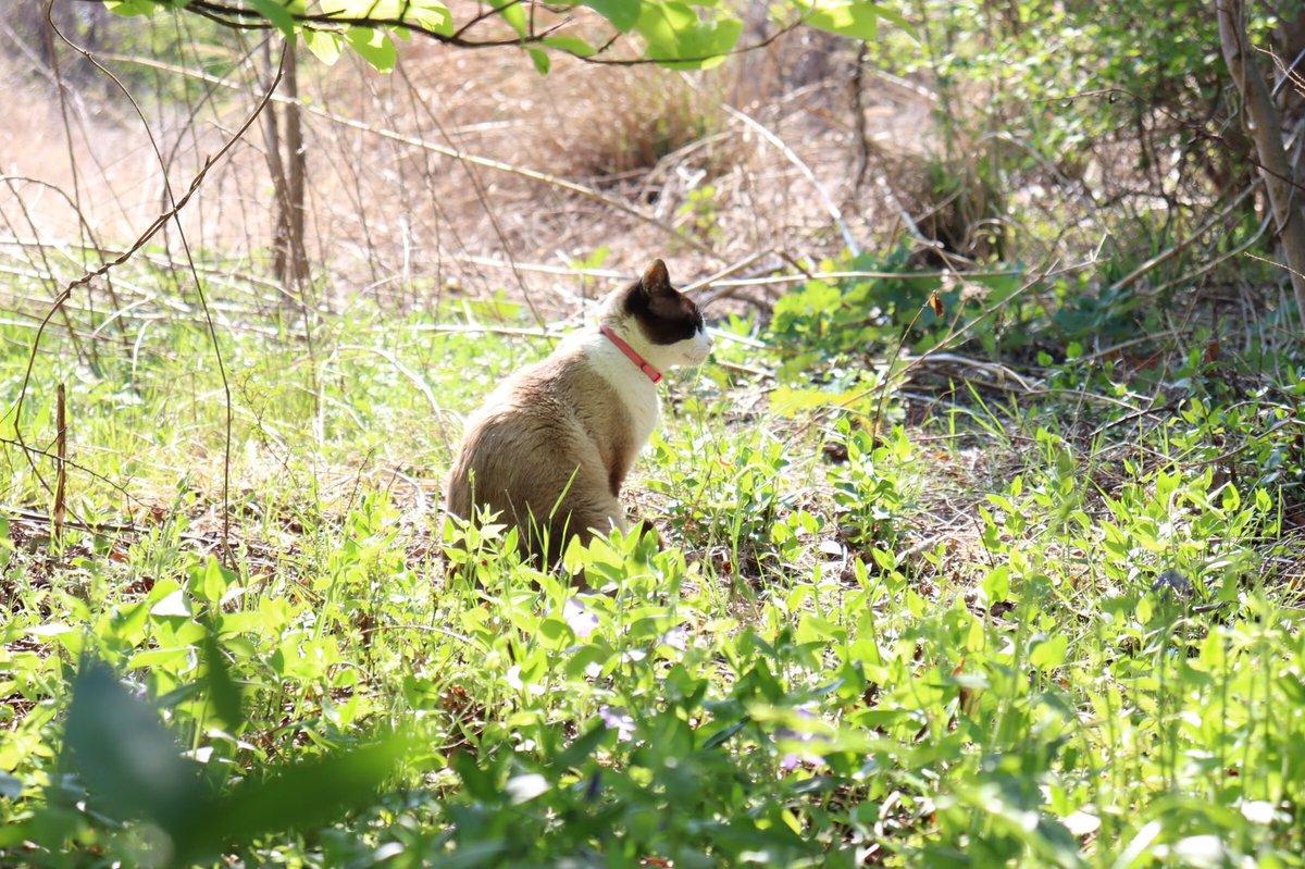 突然すぎる別れだったけど レイニーいつまでも...愛してるよ  #猫 #cat #foto #Goodbye #iloveyou #cute #フィルター越しの私の世界 #さよなら