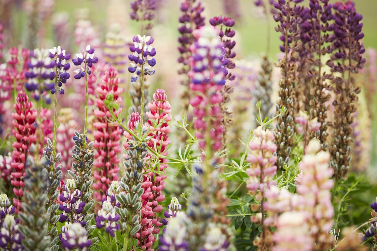 test Twitter Media - Want to try out a new kind of planting calendar in your gardening routines? Why not consider going #biodynamic? https://t.co/WBg5drbP4A https://t.co/TLp35qUt1Q