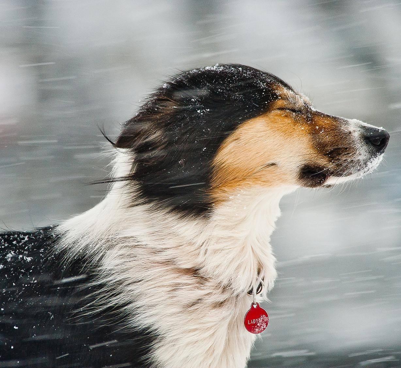 Мокрый снег, сильный ветер и заморозки прогнозируют в Курской области на выходных