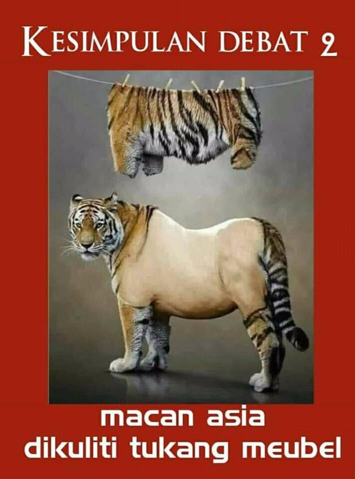 Download 67+  Gambar Kucing Jadi Macan Imut Gratis