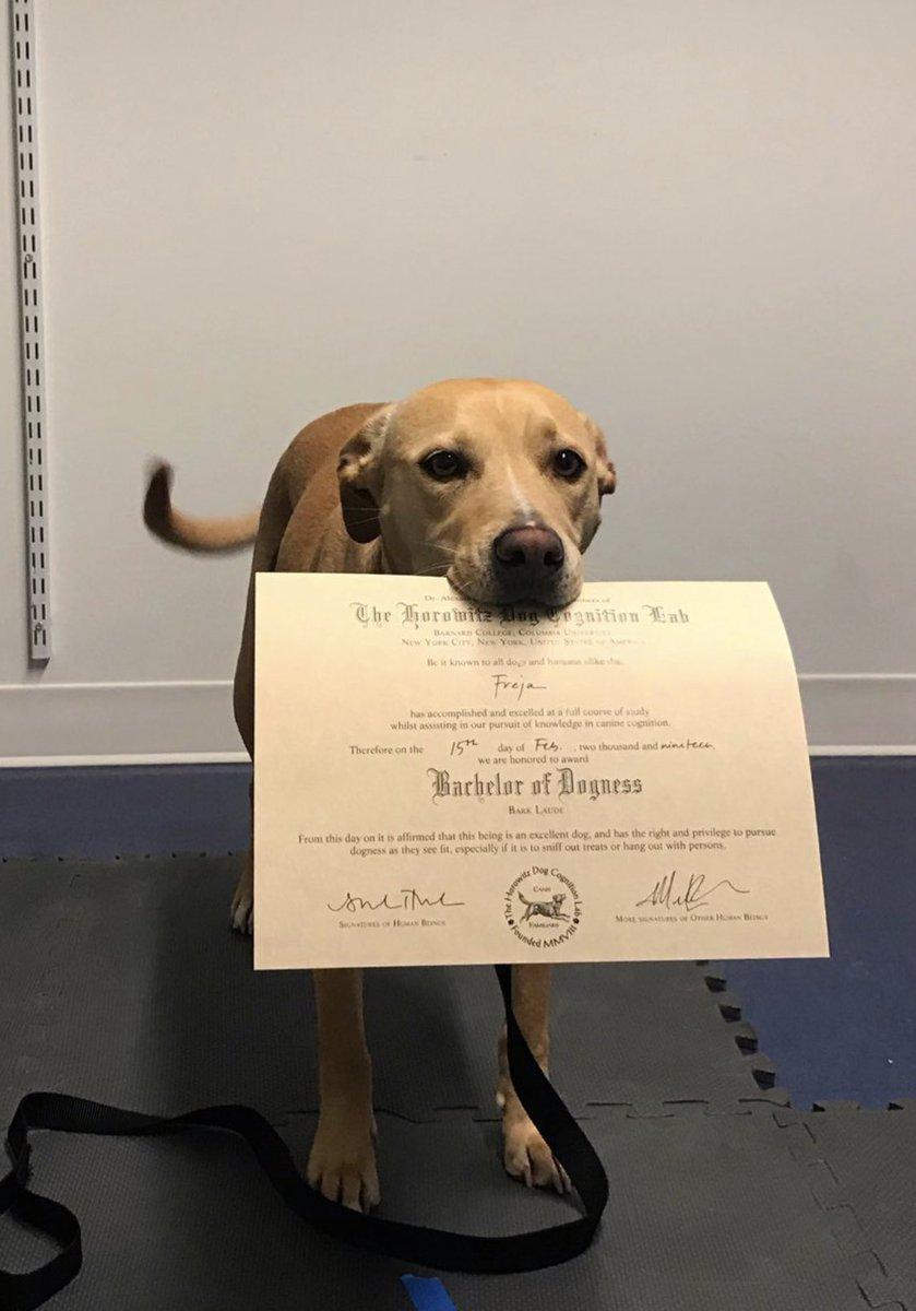 WeRateDogsTM Dog Rates