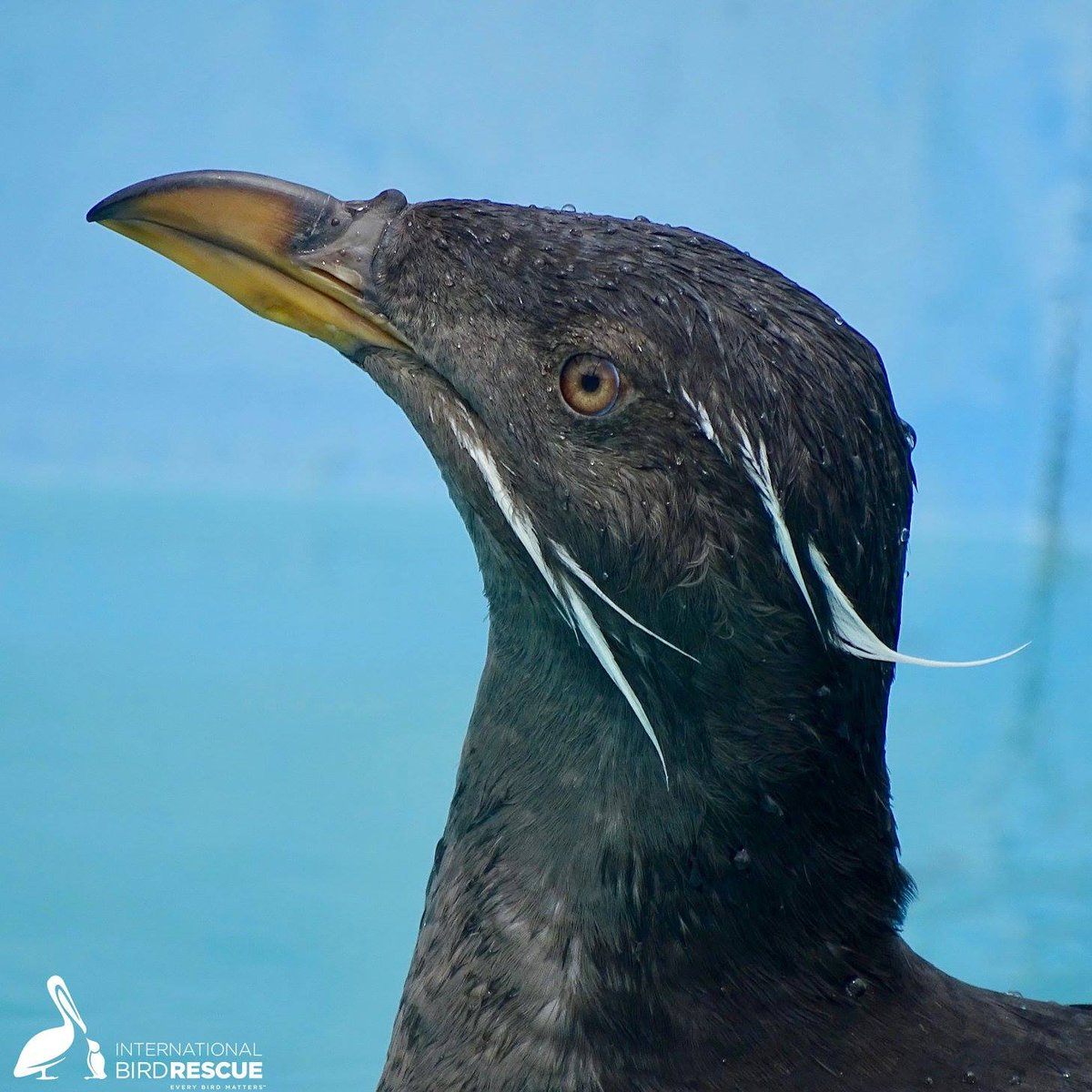 birdfacts hashtag on Twitter