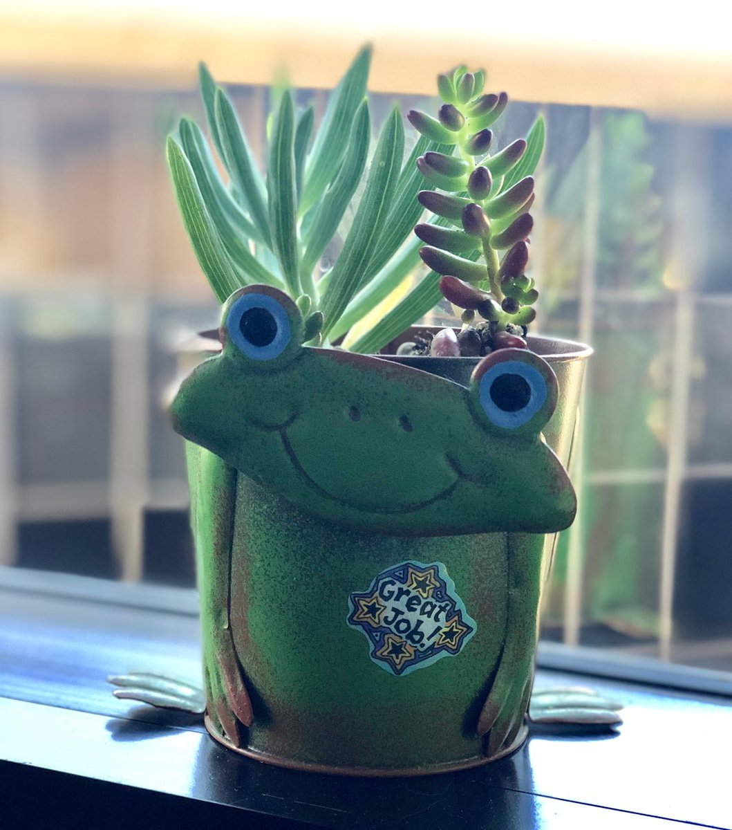 frog pot finally has purpose in life thank you @crapmachine
