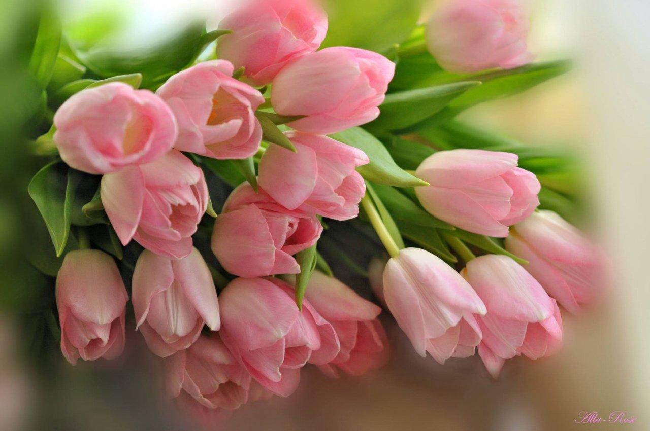 Открытки цветы красивые букеты тюльпанов