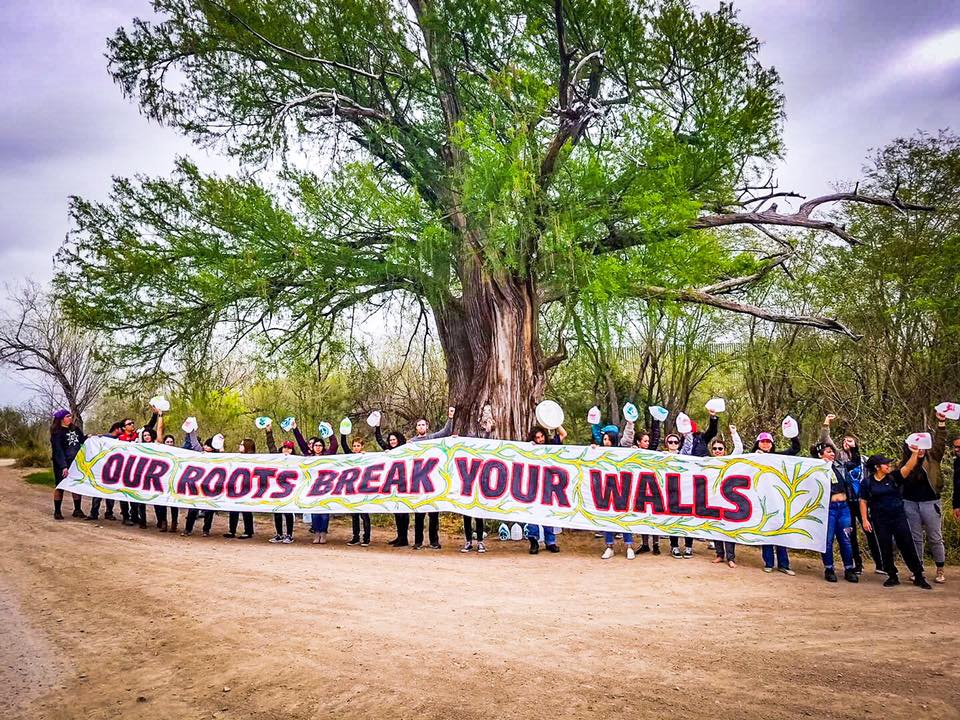 At 900 years old, this Montezuma cypress is said to be the oldest tree in all of Texas. Now, it may be cut off from the community by new #borderwall construction.   #RGV activists say #NoBorderWall!