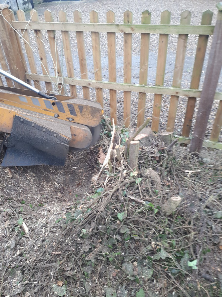 Essex tree stump grinding removing some Hawthorn tree stumps in preparation for planting a new hedge at Willows Green, G…