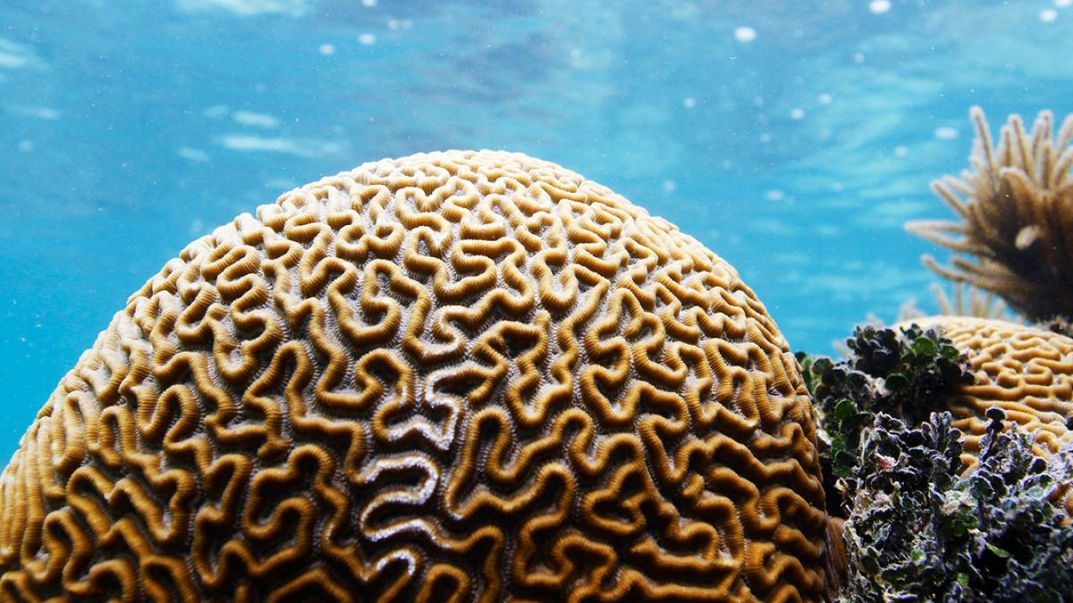 A new study led by John Bruno found current fishing and pollution regulations don't help coral reefs cope with the effects of climate change: https://t.co/QH7hxO7sYI @UNC_Biology @unc_masc @UNCims https://t.co/GFY6C5vJff