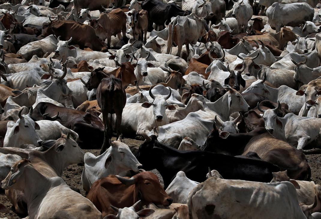 Interview: Killing in the Name of Cows | Vigilante Violence has Left Scores Dead in #India https://trib.al/sSUbDQi