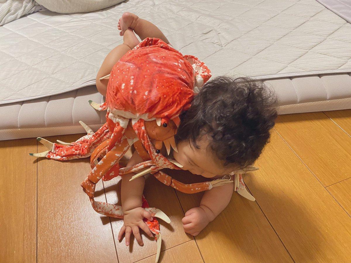 赤ちゃんが「タカアシガニ」に襲われている?!