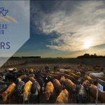 Image for the Tweet beginning: Cattle feeding members - check
