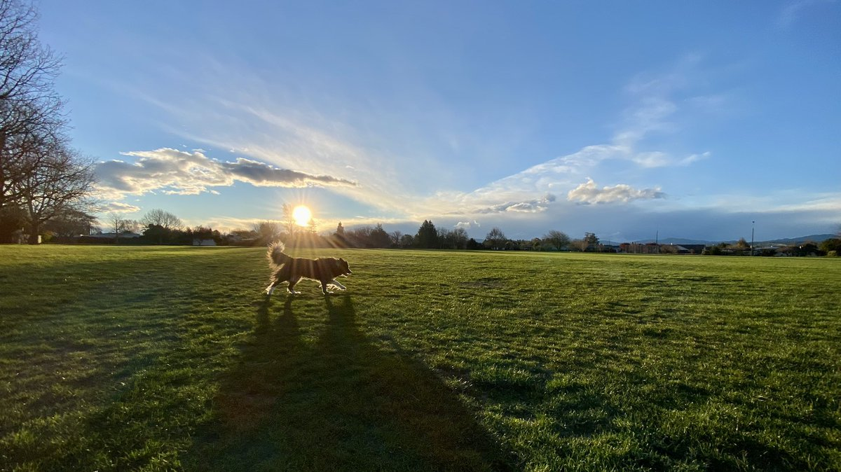 After a very windy day in North Canterbury managed to get out with the woofa tonight and a great shot of the setting sun