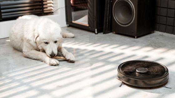 お掃除ロボットルンバ、ペットの糞を回避するモデルを発表!